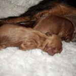 Cyda's first 2 puppies