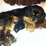 Cyda with her 5 puppies