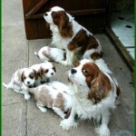 Carys and Winston with pups