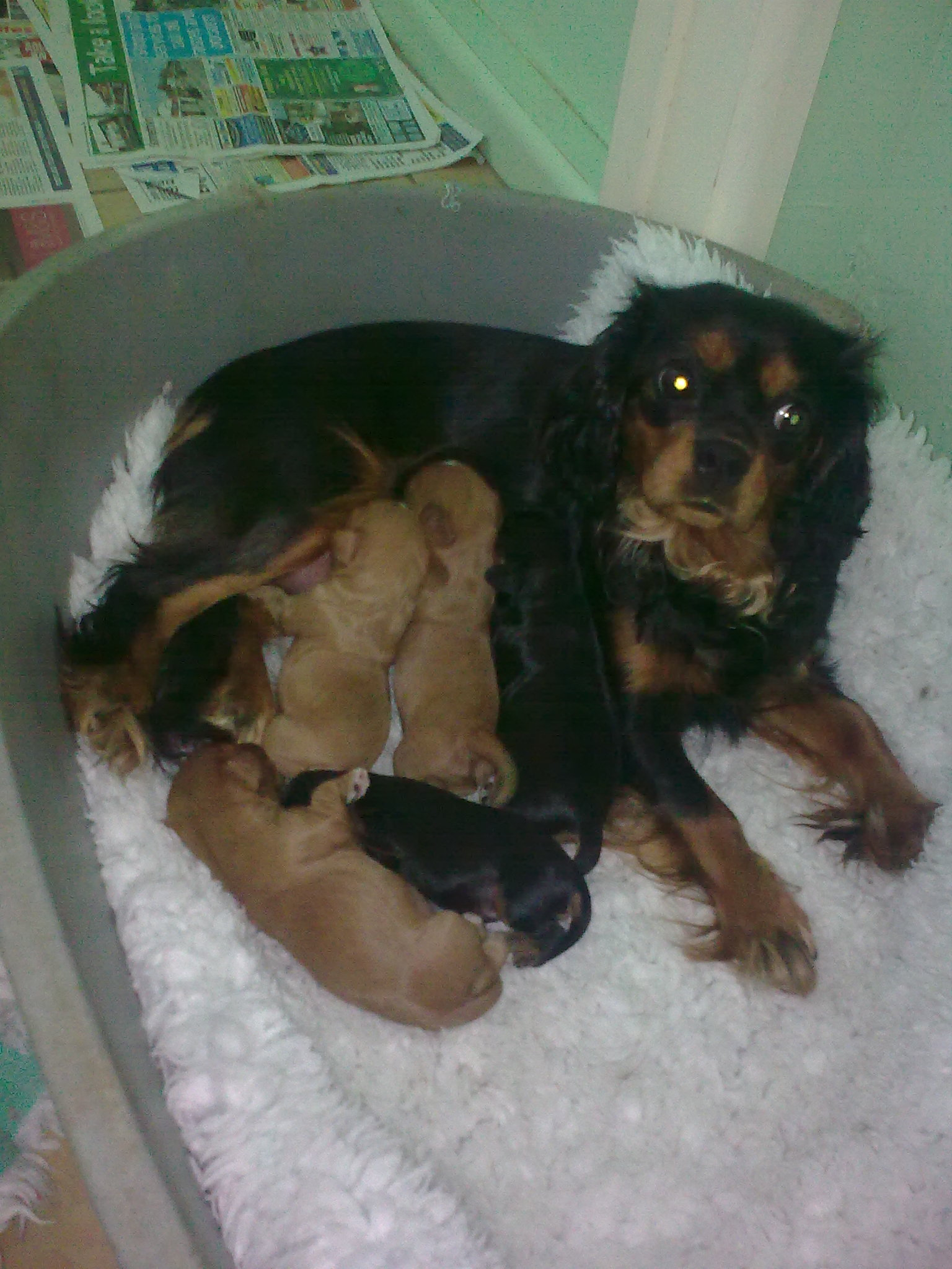 Cyda and her Puppies
