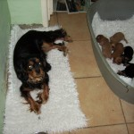 Cyda next to her puppies
