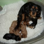 Cyda with her pups at 2 weeks old
