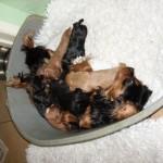 Contented Cyda and pups