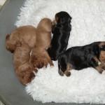 Cyda's Puppies.