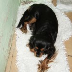 Cyda - resting next to her Puppies