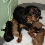 Cyda's puppies at just over 3 weeks old.