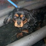 Cyda - Not too sure of Hydrotherapy
