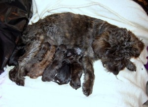 bubbles and her puppies - newly born