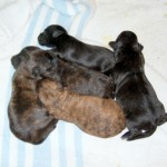 5 of Bubbles' Pups