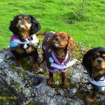 Olive and friends at Hawes