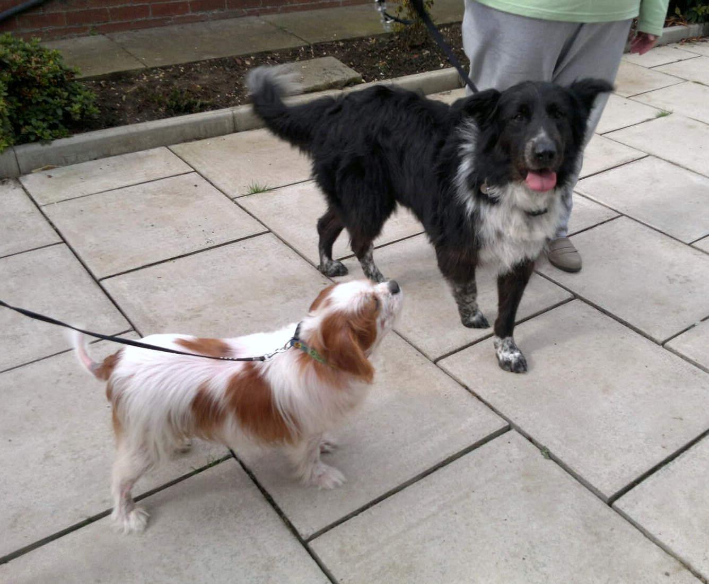 Alfie & Fin