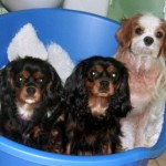 Skully, Cyda & Fin in their new bed