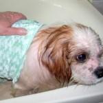 Fin in the bath