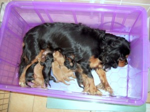 Cyda's puppies at 5 days old