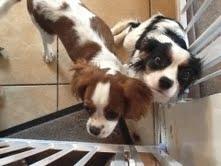 Ollie and Honey Settling in