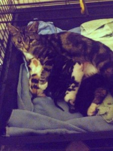 Tabby and kittens