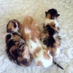 kittens 3 days old