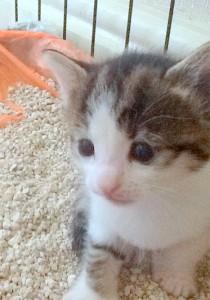 kitten & litter tray