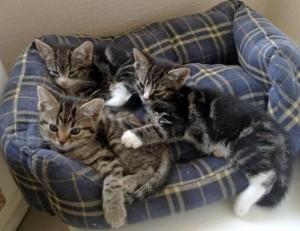 abandoned kittens2