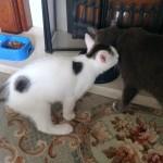 spot meets whisper