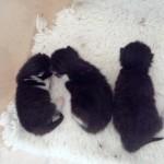wendy's kittens