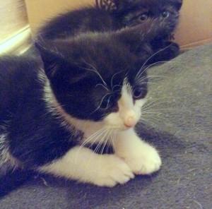 kitten1 (2)