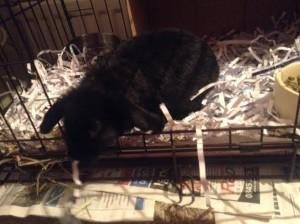 Ebony bunny
